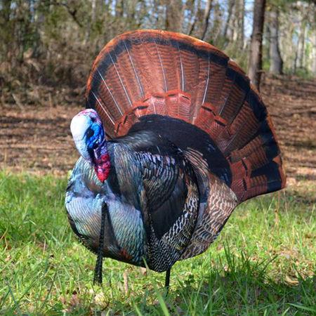 Foldable Turkey Decoys