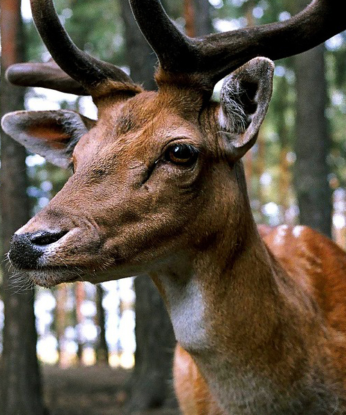 Deer Hunting Tips: Our Top 10 Guide for Hunting Deer