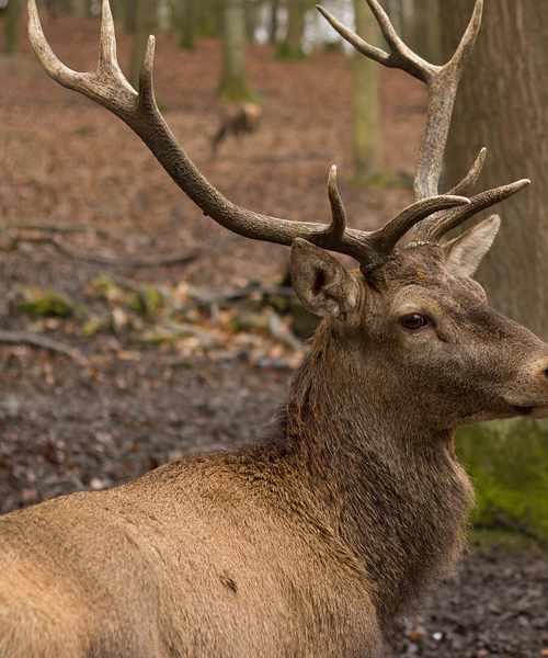 Deer Hunting Rifles: The Top 5 Picks