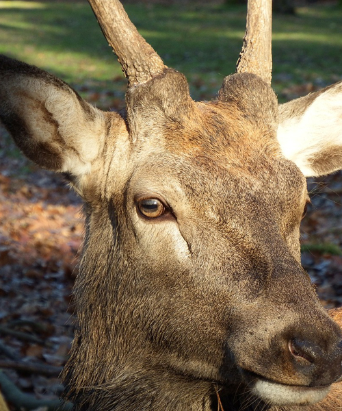 Deer Hunting Season: Where are the Best Spots?